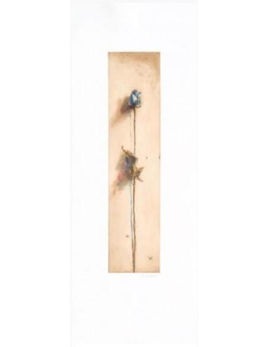 Le rose di Camilla blu