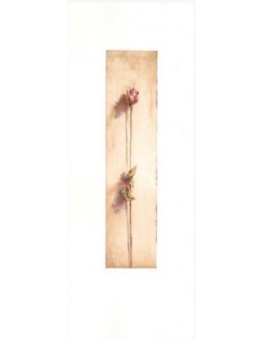 Le rose di Camilla rosa