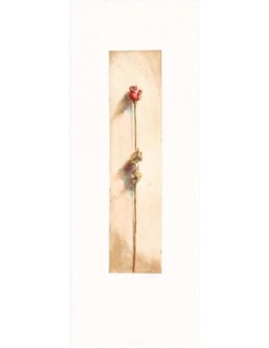 Le rose di Camilla rossa